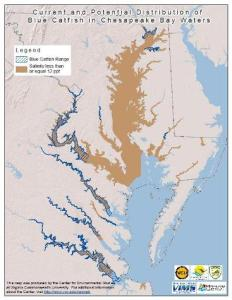 Blue Catfish Range in the Chesapeake Bay. Source: chesapeakebay.noaa.gov/fish-facts/invasive-catfish.