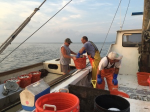 Selling fresh-caught menhaden on the water.